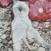 Аватар пользователя KisaLisa