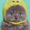 Аватар пользователя Iriska10