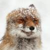 Аватар пользователя Berny