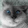 Аватар пользователя Kassir222
