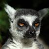 Аватар пользователя lemurio
