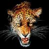 Аватар пользователя Leopardikus