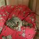 Аватар пользователя Olga174