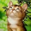 Аватар пользователя Benlinamilla