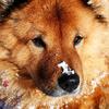 Аватар пользователя NIPIK