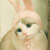Аватар пользователя skoda4ka