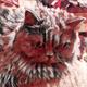Аватар пользователя ignat22