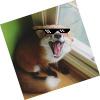 Аватар пользователя MR.PECHENbKA