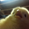 Аватар пользователя SnailTheRapist