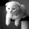 Аватар пользователя Eg0Putina