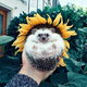 Аватар пользователя ElizavetaMonklev
