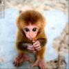 Аватар пользователя Fahrain