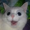 Аватар пользователя Freidinging