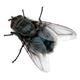 Аватар пользователя DmitriyC