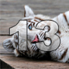 Аватар пользователя WhiteTiger13