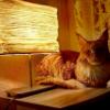 Аватар пользователя NastasPalna