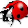 Аватар пользователя Nakajuk