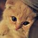 Аватар пользователя Shulc93