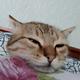 Аватар пользователя argyn.atikeev