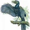 Аватар пользователя Archeopteryx
