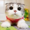 Аватар пользователя lalique