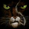 Аватар пользователя cattsman