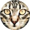 Аватар пользователя knatrhyme
