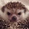 Аватар пользователя Hamsterina