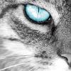 Аватар пользователя Maksmikser