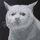 Аватар пользователя yerminsv