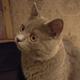 Аватар пользователя smthrandom