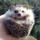 Аватар пользователя ZakyZaky