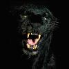 Аватар пользователя LAS404