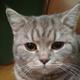 Аватар пользователя liplemerage
