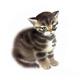 Аватар пользователя BAALIN1