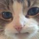 Аватар пользователя skamskiy
