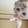Аватар пользователя kotpolosat