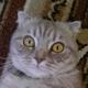 Аватар пользователя Verona31