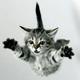 Аватар пользователя myrmiaf