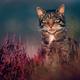 Аватар пользователя kotove