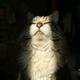 Аватар пользователя wekfa