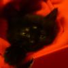 Аватар пользователя Takesik