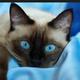 Аватар пользователя Kostilinka
