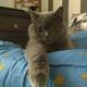 Аватар пользователя Markodiis