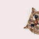 Аватар пользователя Jevetta