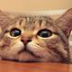 Аватар пользователя Luinile