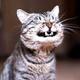 Аватар пользователя leoness