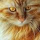 Аватар пользователя Elena5470