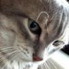 Аватар пользователя korvin38