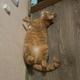 Аватар пользователя Borodozz